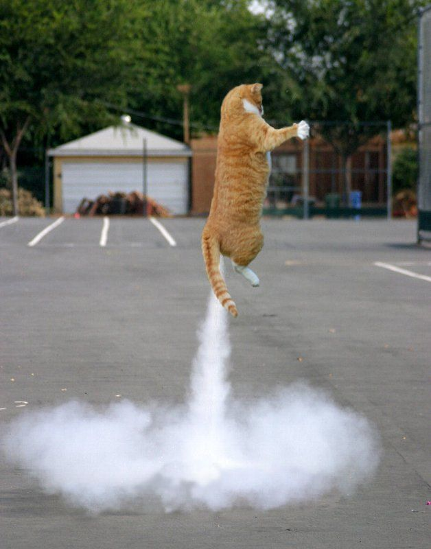 Cat_with_Jet_power.jpg