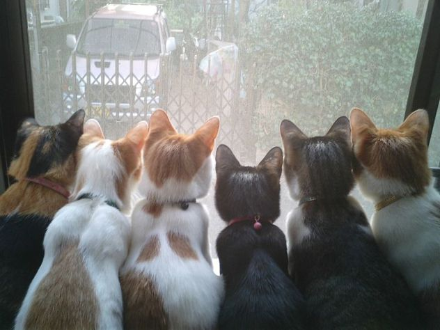 Cats_Window.jpg